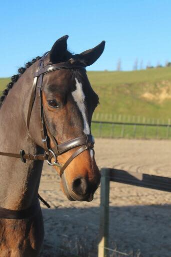 Brown padded bridle