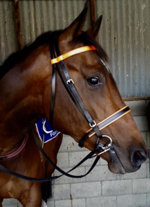 Black with orange trim race bridle and matching reins